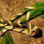Escoteiros: Uma Escola da Natureza