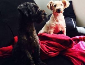 Hospedando um Cão em Casa