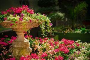 Cuide do Jardim no Final de Semana: Outono