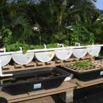 Aquaponia e Alimentação Sustentável