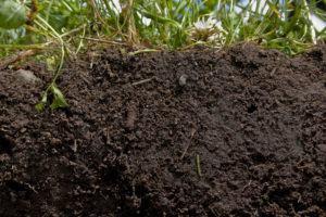 Nitrogênio (N) e Adubação Verde na Horta