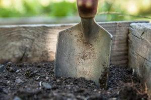 Formigas na Compostagem: Como Resolver