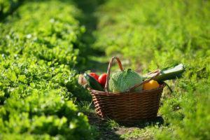 Horta Caseira: Como Definir os Canteiros