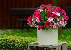 Vasos e Jardineiras com Flores para Entradas
