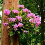 Como Enraizar Mudas de Orquídeas