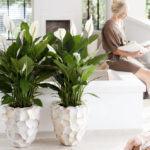Plantas para Apartamentos no Inverno