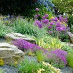 Temperos e Aromáticas para Jardins Rochosos