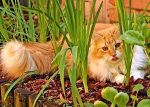 gato horta