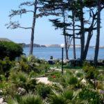Jardim de Beira Mar: O Que Plantar