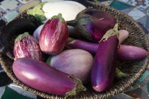 Berinjelas em Vaso para Varandas ou Jardineiras