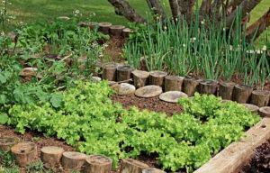 Plantas Companheiras e Antagônicas na Horta