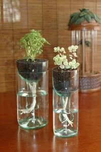 copos vaso plantas