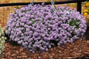 Plantas Rasteiras para Vasos Pendentes