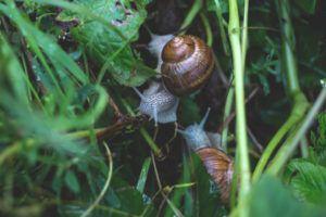 Espaços Verdes para Proteger a Horta das Pragas