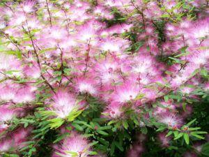 Plantas para Regiões Serranas mais Frias