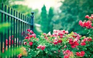 portão flores arbusto