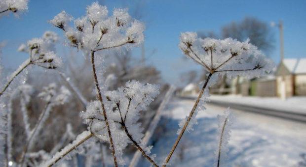 Como Proteger as Plantas no Inverno