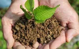 terra broto planta