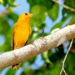 Como Atrair Pássaros para seu Jardim