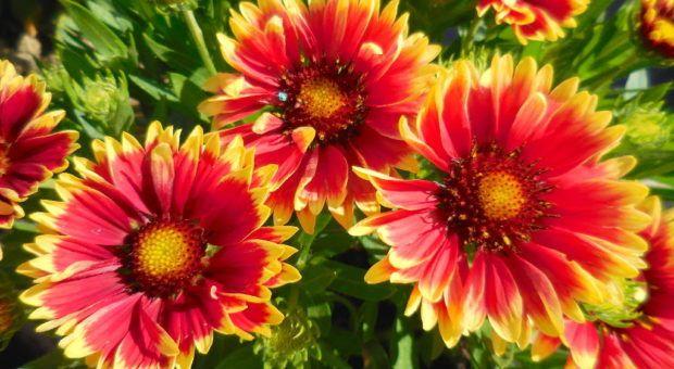 Cultivando Plantas Anuais em Vasos ou Jardim: Prós e Contras