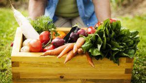 Identificando Alimentos Orgânicos