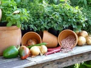 horta legumes vasos