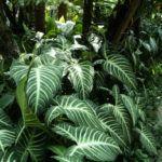 Plantas de Sombra para Espaços de Luz Natural