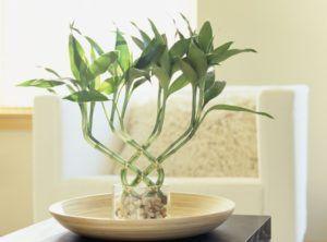 O Feng Shui das Plantas para a Sala de Estar