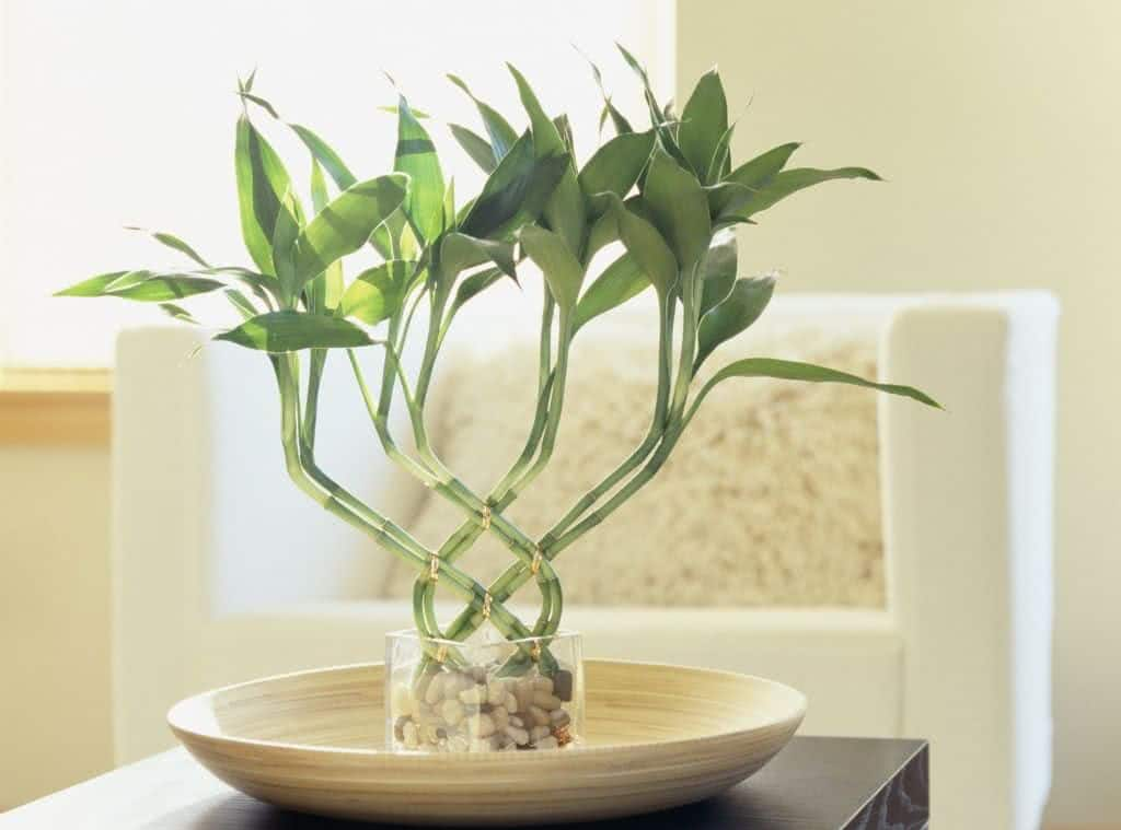 O feng shui das plantas para a sala de estar for Sala de estar feng shui