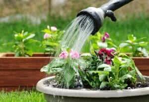 regando flores vaso