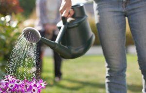 Como Economizar Água no Jardim