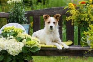 cachorro jardim