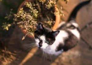 gato vaso de planta