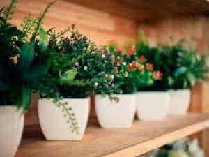 plantas de plastico