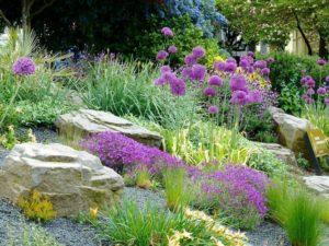 Como Plantar em Meio a Rochas e Pedras