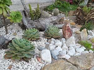 jardim rochoso suculentas