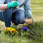 Quando e Como Adubar as Plantas