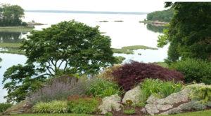 Árvores e arbustos para lugares com ventos fortes ou constantes