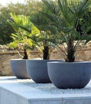 plantas para lugares com ventos