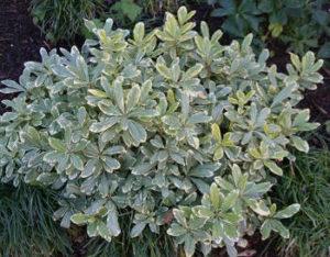 plantas resistentes aos ventos