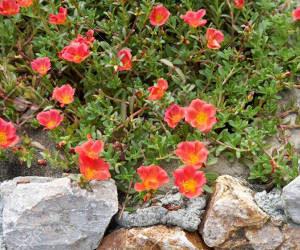 plantas para muros de pedra