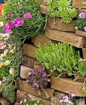 plantas para muros de arrimo