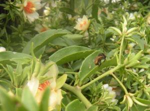 As abelhas estão sumindo! Vamos salvar as abelhas?