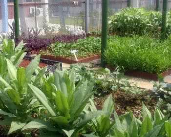 proteção da horta