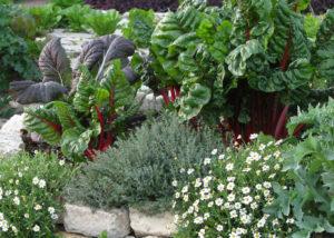 Como ter uma horta decorativa