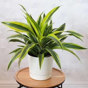 planta que purifica o ar