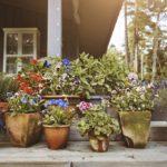 Como Fazer um Jardim só com Vasos de Plantas