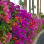 Plantas para cercas vivas no paisagismo urbano