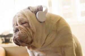 bulldog phones