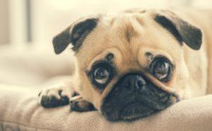 Reduza o Estresse dos Pets em Festas e Viagens